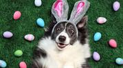 Easter Activities: 4 Ways To Include Your Pet in Easter Celebrations