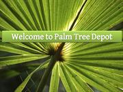 How to Plant Sabal Palm? 7 Steps to Know