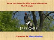 Prune Your Trees The Right Way And Promote Their Growth
