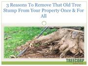 3 Reasons To Remove That Old Tree Stump