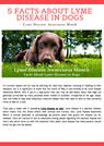 5 Facts About Lyme Disease in Dogs