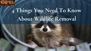 4 Things You Need To Know About Wildlife Removal