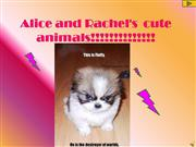 Alice�s cute animals!!!!!!!!!!!!!!