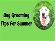 Dog Grooming Tips For Summer