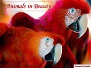 Animals in Beauty part1