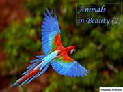 Animals in Beauty part2