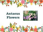 Find the Best Event  Florist in Melbourne - Antaeus Flowers