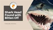 Fishbuddy Directory - Enormous Shark Head Found with Bitten Off