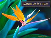 Nature at it's best