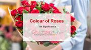 colour of roses