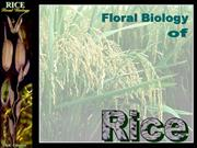 Floral Biology of rice