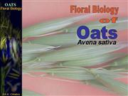 Floral Biology of oats