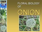 Floral Biology of onion