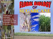 Floral Biology of sugarcane