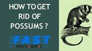HOW TO GET RID OF POSSUMS ? | FAST PEST CONTROL