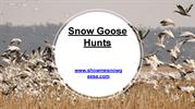 Snow Goose Hunts