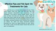 Effective Flea and Tick Spot On Treatments for Cats