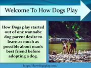 Welcome to how dogs play