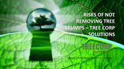 RISKS OF NOT REMOVING TREE STUMPS – Tree corp Solutions