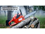 Experienced Tree Removal Specialists in Mint Hill NC