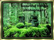 beautiful nature photography