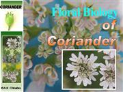 Floral Biology of coriander