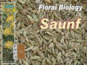 Floral Biology of saunf
