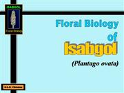 Floral Biology of isabgol