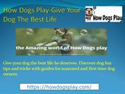 How Dogs Play-Give Your Dog The Best Life
