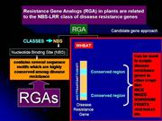 Resistance Gene Analogues - Molecular Markers