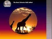 The Best Victoria Falls Safari