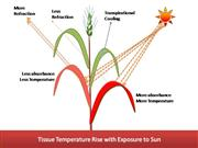 Heat Tolerance DEPICTION