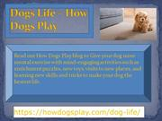 Dogs Life – How Dogs Play ppt