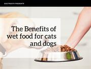 The Benefits of wet food for cats and dogs