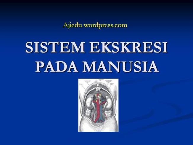 9 1 Sistem Ekskresi Manusia Authorstream