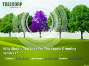 Why Should You Look For The Stump Grinding Services
