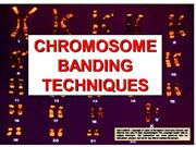 Chromosome Banding Techniques