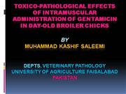 toxico-pathological effects of intramuscular administration of gentami
