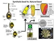 Synthetic Seed ONE slide