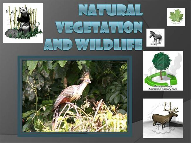 natural vegetation and wildlife class 9