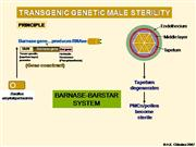 Barnase Barstar Gene of male sterility