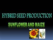 Hybrid Seed Production in Sunflower and Maize