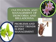 cultivation collection of dioscorea and pest control and management
