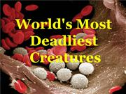 DEADLIEST CREATURES