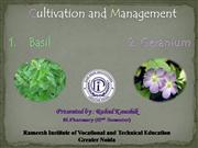 Basil and Geranium Cultivation and Management
