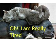Oh!! I am Really Tired