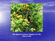 The Quest for Peace Chapter 15