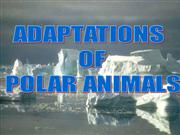 POLAR BEAR ADAPTATION