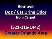 remove dog car urine odor from carpet 321-216-1442