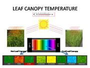 LEAF CANOPY TEMPERATURE
